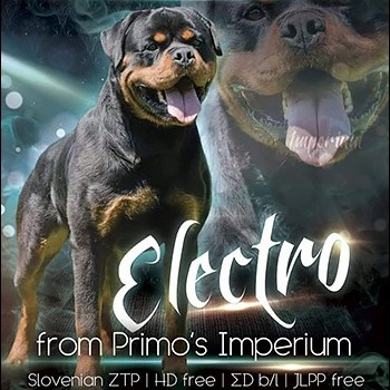 Rottweiler - ELECTRO